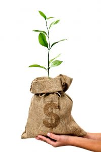 Plant growing from a bag of money